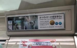 神戸ポートライナー全車両に弊社の「抗菌・抗ウイルス・消臭」の処理実施の広告が掲載されています。